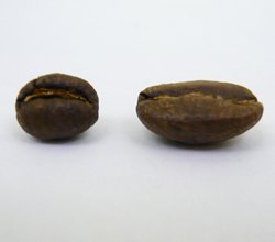 Comparison of Peaberry and Normal Coffee Bean