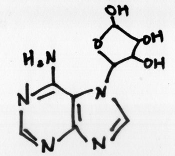 adenosine-chemical-structure